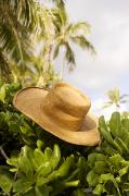 Outdoor Still Life Art - Still life of straw hat by David Cornwell/First Light Pictures, Inc - Printscapes