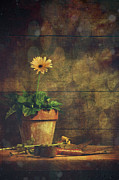Upright Prints - Still life of yellow Gerbera daisy in clay pot Print by Sandra Cunningham