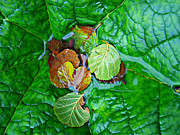 Wet Leaves Framed Prints - Still Life With Leaves And Water Framed Print by Paul Causie