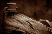 Sepia Art - Still Life with Wheat I by Tom Mc Nemar