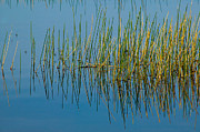 Still Water And Grasses Print by Rich Franco