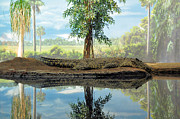 Tropical Wildlife Posters - Still Water Reflection Poster by Jan Amiss Photography