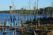 Blue - Still Wood - Manasquan Reservoir by Angie McKenzie