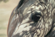 Horse Art Pastels Prints - Stillness Print by Kim McElroy