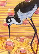 Shorebird Paintings - Stilt by Catherine G McElroy