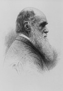 Darwin Framed Prints - Stipple Engraving Of Charles Darwin As An Old Man Framed Print by National Library Of Medicine