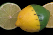 Sour Art - Stitched Lemon and Lime by Rob Byron