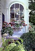 Stockbridge Window Boxes Print by David Lloyd Glover