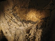 Drawings Photos - Stone-age Cave Paintings, Lascaux, France by Javier Truebamsf