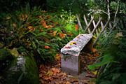 Moist Framed Prints - Stone Bench Framed Print by Carlos Caetano
