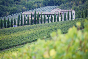 Grapevines Photos - Stone Farmhouse and Vineyard by Jeremy Woodhouse