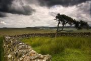 Cloudy Days Posters - Stone Fence And Tree With Storm Clouds Poster by John Short