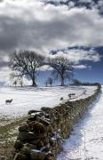 Snow-covered Landscape Art - Stone Fence, Weardale, County Durham by John Short
