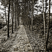 Skip Nall Art - Stone Path by Skip Nall