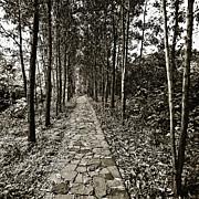 Stone Path Print by Skip Nall