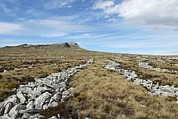 Two Islands Photos - Stone Runs, Falkland Islands by Charlotte Main