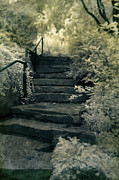 Staircase Railing Framed Prints - Stone Staircase in the Woods Framed Print by Jill Battaglia