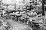 Jeff Holbrook - Stone Wall Trail