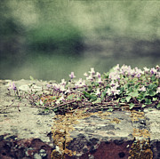 Denmark Photos - Stone Wall With Flowers by Silvia Otten-Nattkamp Photography