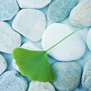 Fresh Green Posters - Stones And A Gingko Leaf Poster by Priska Wettstein