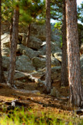 South Dakota Tourism Photos - Stones and trees by Mike Oistad