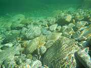 Turquoise Stones Art - Stones under the water by Mats Silvan