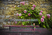 Park Benches Posters - Stop and Smell the Roses Poster by Debra and Dave Vanderlaan