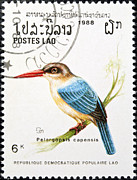 Stamp Collection Art - Stork billed kingfisher bird stamp. by Fernando Barozza