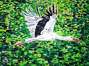 Stork Painting Framed Prints - Stork in Flight Framed Print by Valerie Ornstein