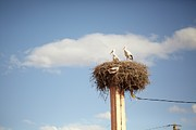 Component Photo Framed Prints - Storks Framed Print by Copyright Adrianko