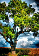 Big Tree Photos - Storm Behind the Tree by Emily Stauring