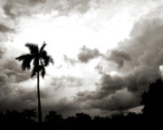 Florida Flowers Posters - Storm Brewing - Sepia Poster by Chris Andruskiewicz