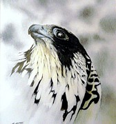 Falcon Drawings Metal Prints - Storm Coming Metal Print by Stan White