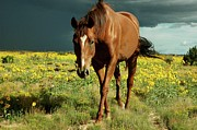 Santa Fe Photos - Storm Horse by photo © Jennifer Esperanza