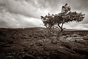 Hawai Prints - Storm Moving In - Sepia Print by Christopher Holmes
