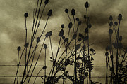 Queen Annes Lace Framed Prints - Storm on the Way Framed Print by Bonnie Bruno