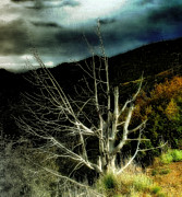 Dead Tree Prints - Storm over the Jemez Mountains Print by Ellen Lacey