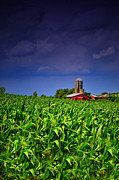 Country Scene Prints - Stormy Corn Print by Emily Stauring