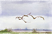 Texas Wildlife Print Art - Stormy Flight by Ray Keeling