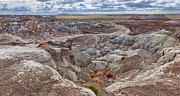 Panoramics Framed Prints - Stormy Morning At Petrified Forest  Framed Print by Sandra Bronstein