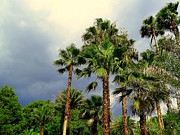 Storm Prints Digital Art Posters - Stormy Skies and Palms Poster by Sheri McLeroy