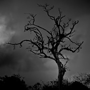 Stormy Tree Print by Kevin Barske