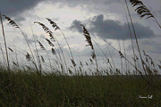 Sea Oats Digital Art Prints - Stormy View from the Dunes Print by Suzanne Gaff