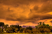 Burros Art - Stormy Weather at Red Rocks Canyon by David Patterson