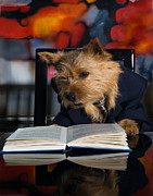 Dog Photo Posters - Story Book Terrier Poster by Susan Stone