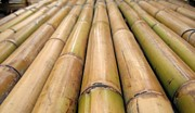 Parallel Lines Prints - Straight Bamboo Poles Print by Yali Shi