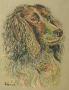 Richard Pastels - Straight from the field - Spaniel portrait by Richard James Digance