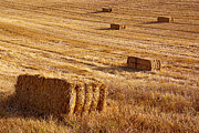 Yellow Prairie Photos - Straw Field by Carlos Caetano