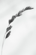 Wintry Photo Prints - Straw Print by Gabriela Insuratelu