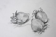 Strawberry Drawings Framed Prints - Strawberries Framed Print by Jan Bennicoff